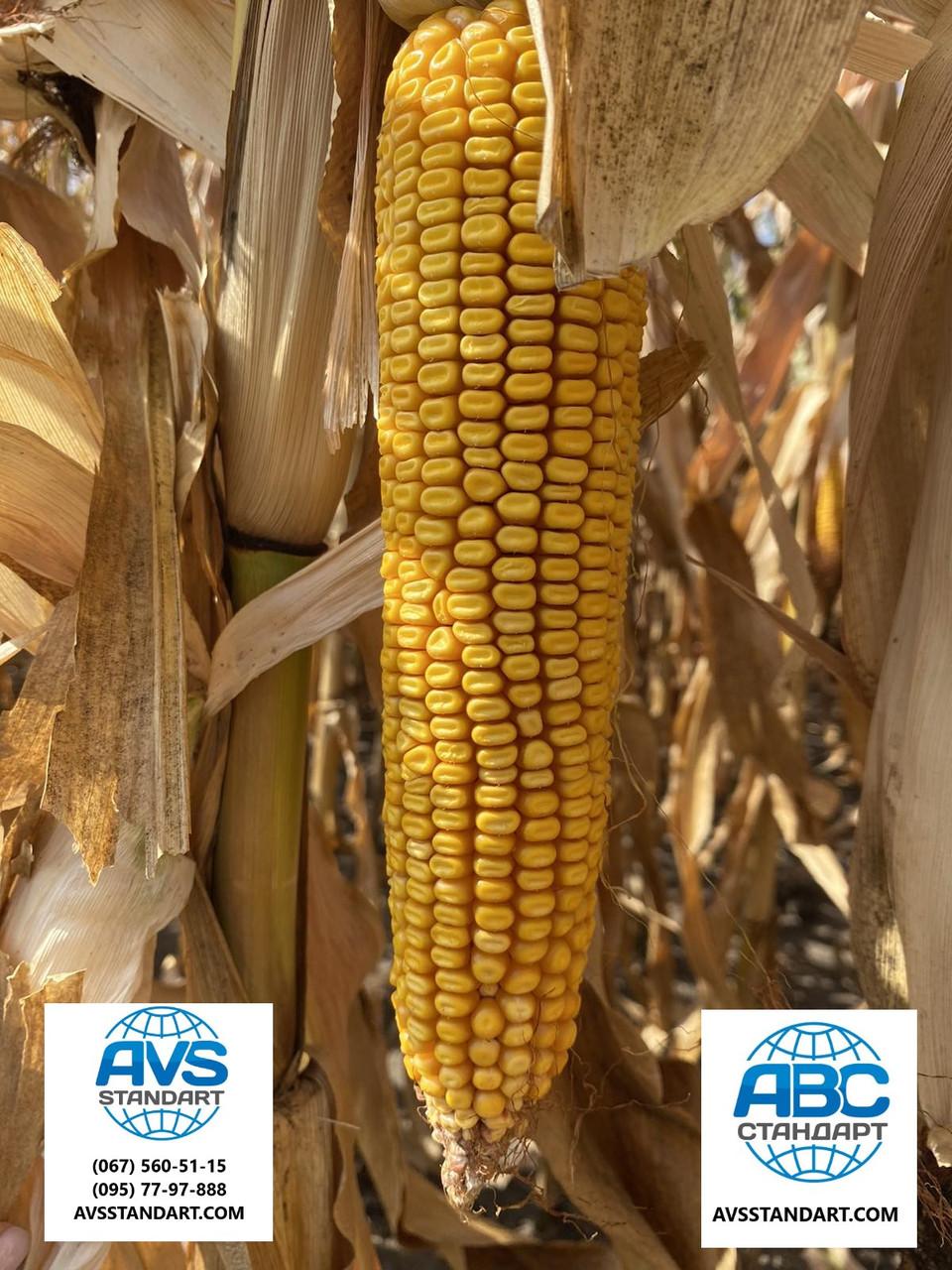 Гібрид кукурудзи АНДРЕС ФАО 350 врожайність 130ц / га аналог ДКС 4351. Стійкий посуха хвороби шкідники 9 балів. В наявності моємо всі фракції, у фірмових мішках.