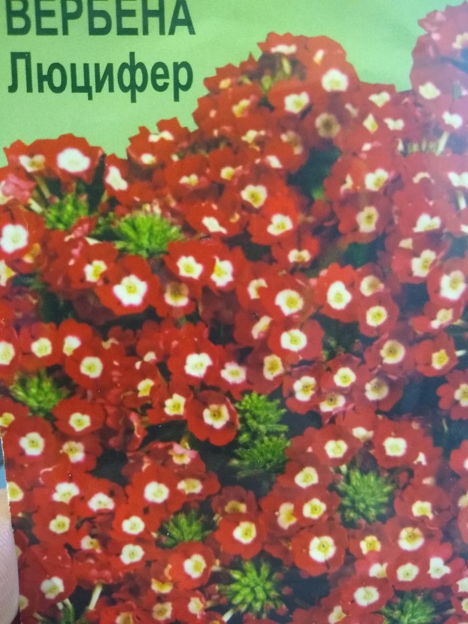 Насіння квітів вербени гібрид Люцифер 0.1 грам Агрофірма Элитсорт Україна