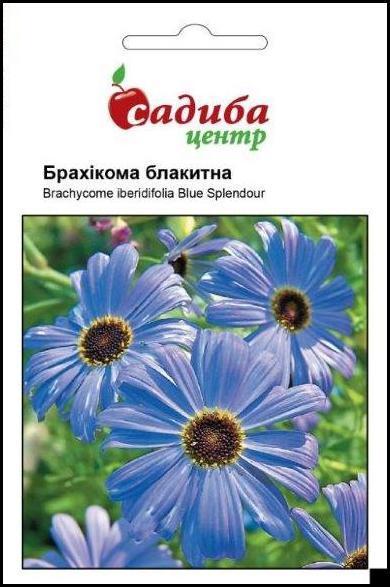 Брахікома блакитна (блакитний вогник) насіння (Hem Zaden) 0.1 г