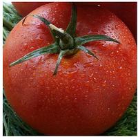 ЦАРИНF1 - семена томата, Syngenta, фото 1