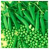 МУЦИО - насіння гороху овочевого, Syngenta