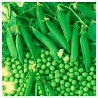 МУЦИО - насіння гороху овочевого, Syngenta, фото 1