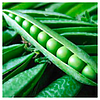 ПРЕЛАДО - семена гороха овощного, Syngenta