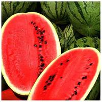 АСТРАХАН F1 - насіння кавуна 1 000 насінин, Syngenta