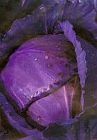 """Семена - Капуста краснокачанная """"Лангедейкер"""" (Satimex, Германия)  300шт"""