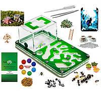 """Муравьиная ферма Смарт """"Амазонка"""" Комплект Премиум + колония муравьев, корм, декор (18x10x7 см)"""