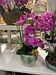 Искусственная орхидея фаленопсис латексная сиреневая (95 см), фото 3