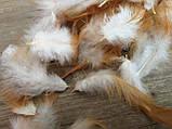 Перья бело-рыжее для декора 150 шт\уп 6 гр, 30 грн, фото 3