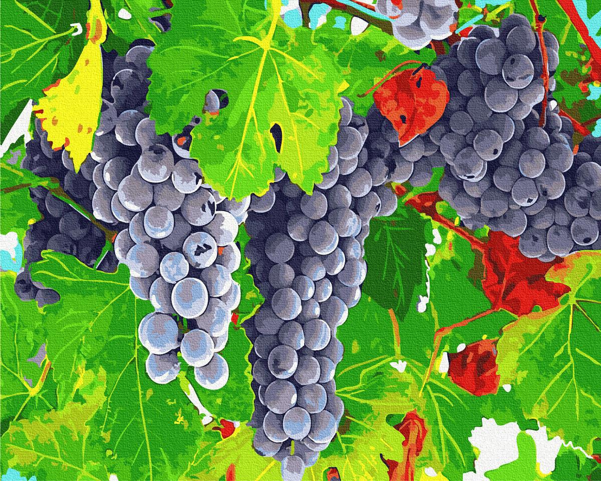 Картина по Номерам Виноградные грозди 40х50см RainbowArt