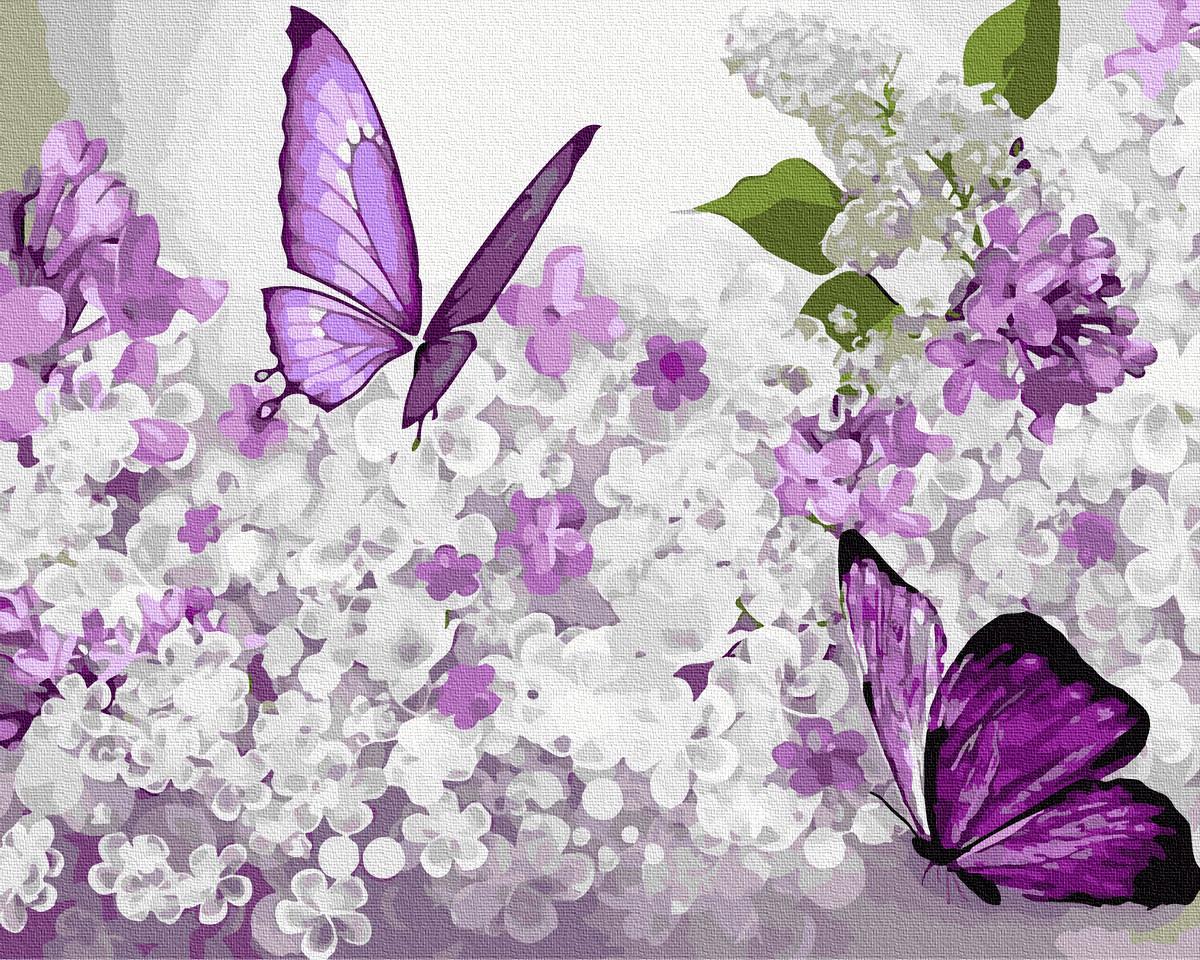 Картина за Номерами Фіолетові метелики на бузку 40х50см RainbowArt