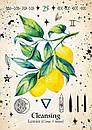 Green Witch Oracle Cards/ Оракул Зеленої Відьми, фото 5