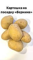 Картошка на посадку Бернина 1кг. ранняя 65-80дн.