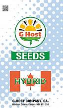 Семена кукурузы G Host GS115B34 ФАО 340