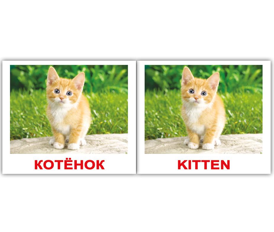 """Картки міні російсько-англійські """"Будинок. тварини/Domestic"""" 40 карт., в пак. 8*10см, ТМ Вундеркінд з співав"""