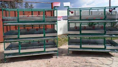 Клетки для выращивания птицы