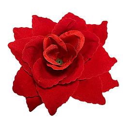 Роза бархат остроконечная, 13 см (50 шт в уп)