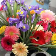 Професійні насіння квітів у банках