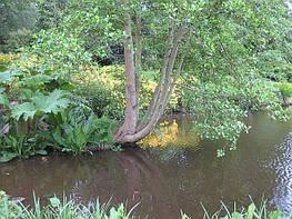 Место единения с природой