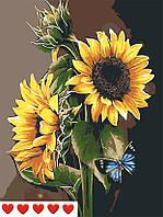 Картина по номерам Подсолнухи, цветной холст + лак, 40*50 см, без коробки Barvi