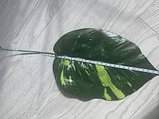 Искусственный лист диффенбахии для декора и добавок в композиции., фото 3