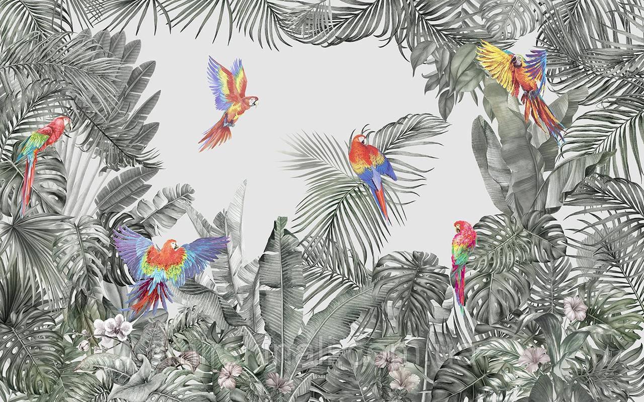 Папуги 1