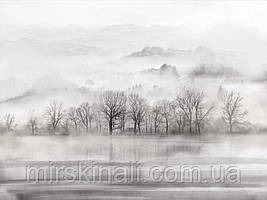 Ліс в тумані №5