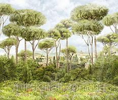 Ліс 1