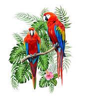 Птиці 20