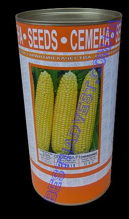 Семена кукурузы «Спокуса F1» 500 г, инкрустированные (Vitas), фото 2