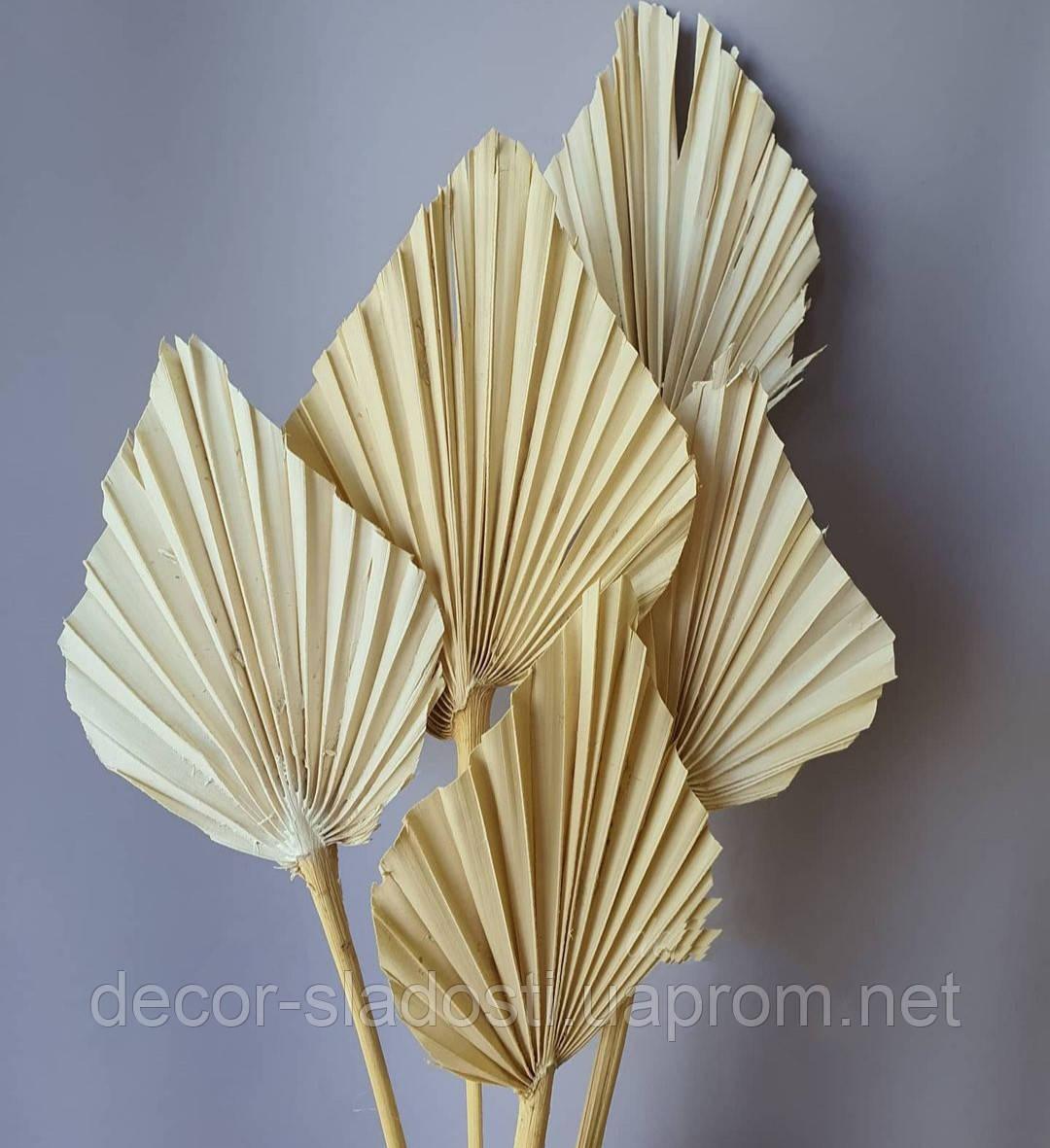 Лист palmspear