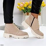 Бежевые женские ботинки гриндерсы из натуральной замши на низком ходу, фото 2