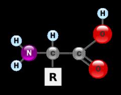 L-lysine (Л-Лизин)