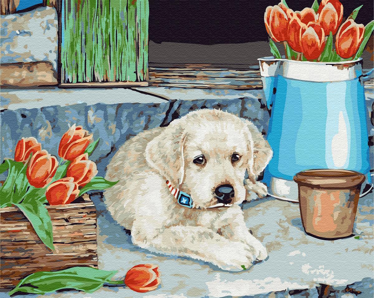 Картина по номерам 40×50 см. Brushme Щенок лабрадор (GX 21481)