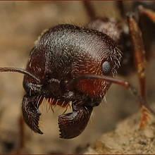 Препарати від мурах, мух, капустянки, слимаків, кротів і мишей