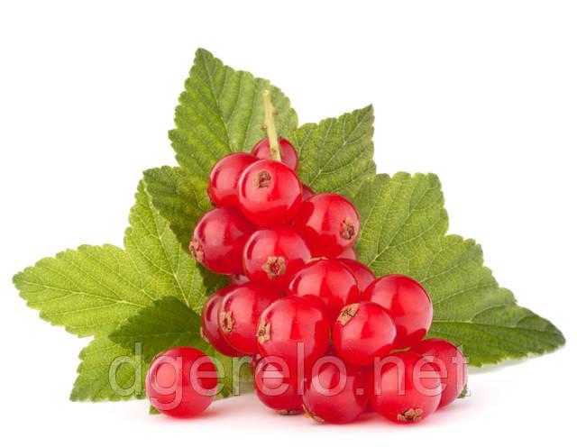 Красная смородина - сорта, болезни, свойства, уход