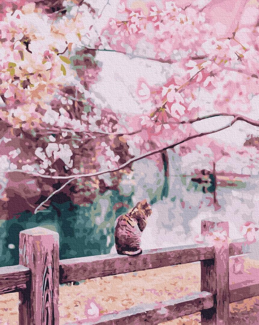 Котик в цветущей сакуре