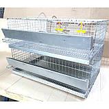 Клетка для перепелов трехъярусная на 120 голов Купить клетку для перепелов Доставка по всей Украине!, фото 2