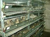 Клетка для перепелов трехъярусная на 120 голов Купить клетку для перепелов Доставка по всей Украине!, фото 4