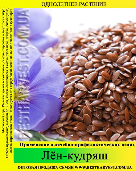 Семена лен-кудряш (масличный) 1 кг