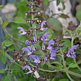 Настойка Шалфея Многокорневого (Salvia Miltiorrhiza) 1:3 45% 200 мл, фото 2