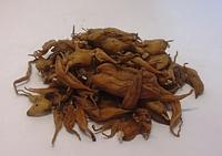 Ятрышник (корень) 50 гр (Свежий урожай)