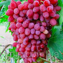 Виноград кишмиш Велес (ранний)