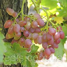 Виноград кишмиш Лучистый (ранний)