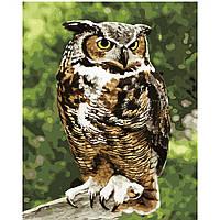 Картина по номерам Strateg Мудрая сова, 40х50 см
