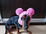Одяг для собаки шапка з двома помпонами, фото 8