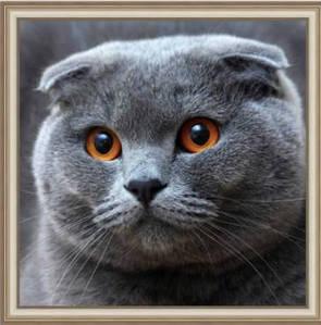 Картина алмазами даймонд Милый котенок 1шт (0141)