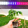 Фитосветильники для выращивания рассады
