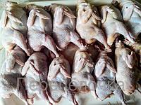 Мясо перепела ( 2-2,5мес) 200-250гр