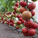 Насіння томату KS 1157 F1 (100 нас.) Kitano, фото 2