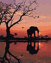 Картина за Номерами Слон на заході 40х50см RainbowArt